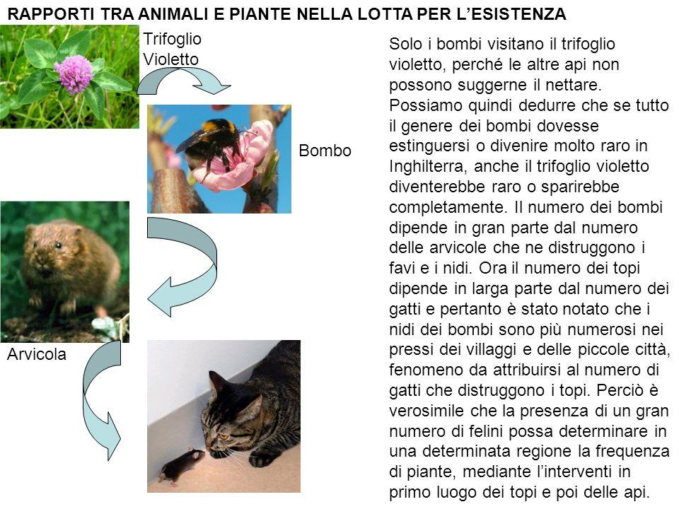 RAPPORTI TRA ANIMALI E PIANTE NELLA LOTTA PER L'ESISTENZA