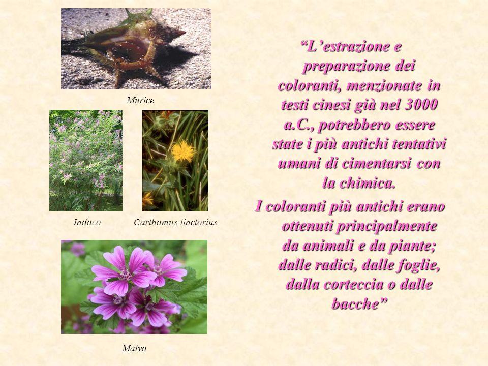 Carthamus-tinctorius