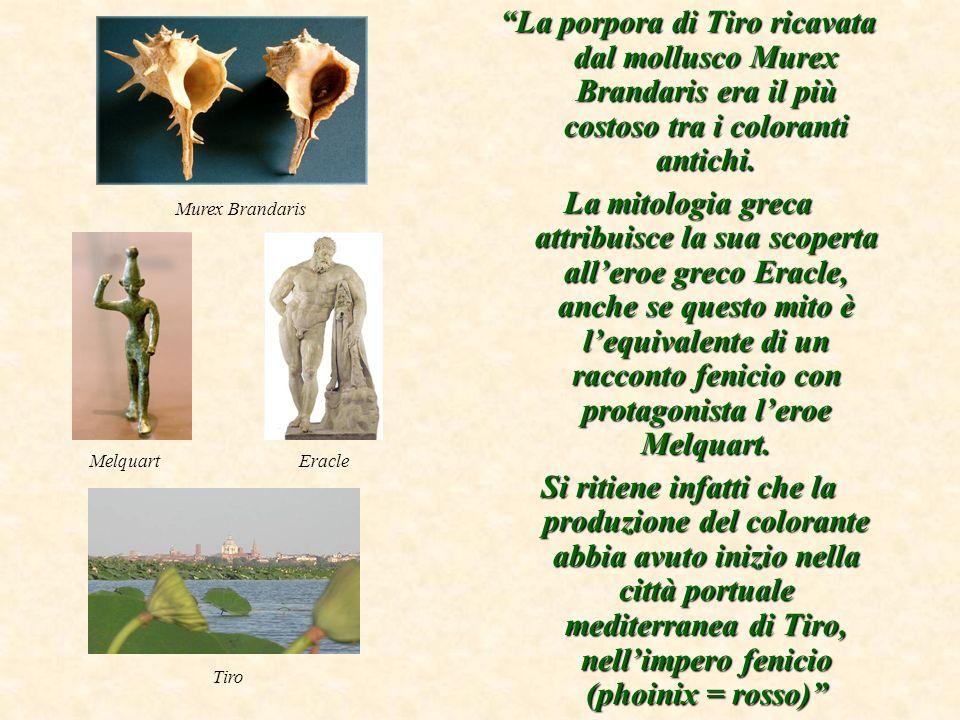 La porpora di Tiro ricavata dal mollusco Murex Brandaris era il più costoso tra i coloranti antichi.