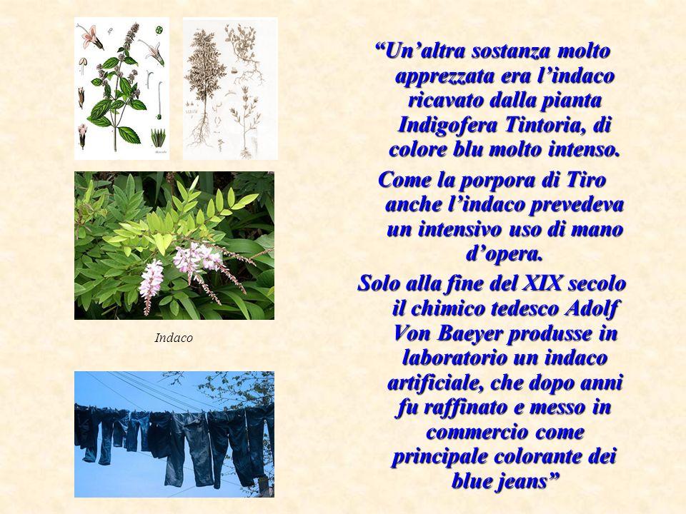 Un'altra sostanza molto apprezzata era l'indaco ricavato dalla pianta Indigofera Tintoria, di colore blu molto intenso.