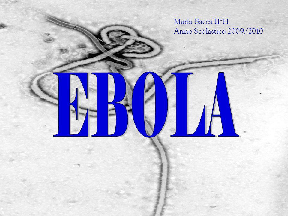 Maria Bacca II°H Anno Scolastico 2009/2010 EBOLA