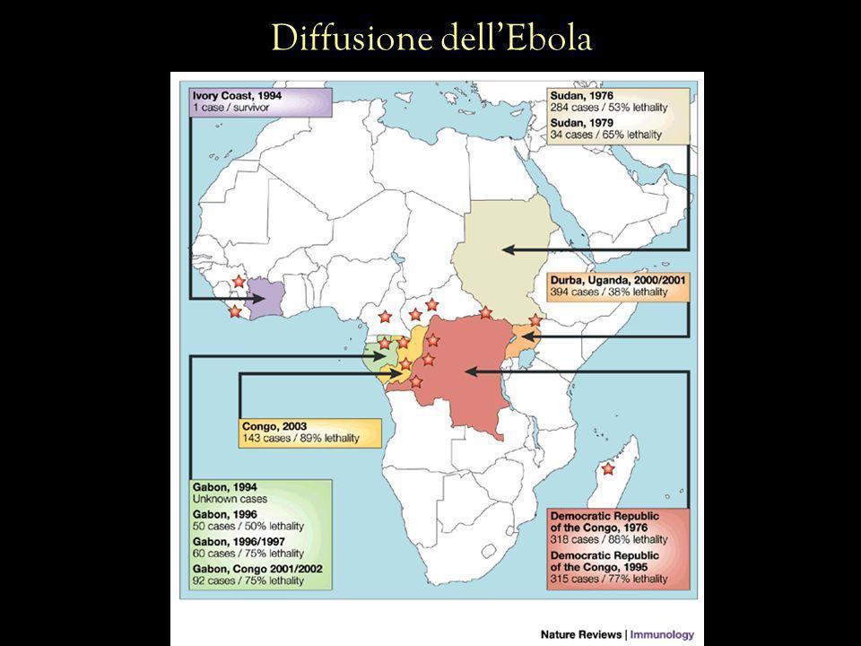 Diffusione dell'Ebola