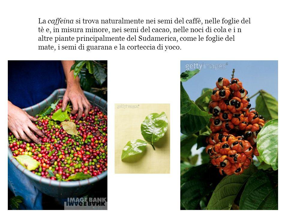 La caffeina si trova naturalmente nei semi del caffè, nelle foglie del tè e, in misura minore, nei semi del cacao, nelle noci di cola e i n altre piante principalmente del Sudamerica, come le foglie del mate, i semi di guarana e la corteccia di yoco.