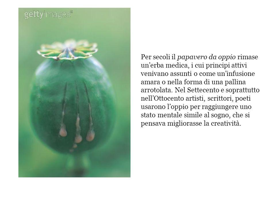 Per secoli il papavero da oppio rimase un'erba medica, i cui principi attivi venivano assunti o come un'infusione amara o nella forma di una pallina arrotolata.