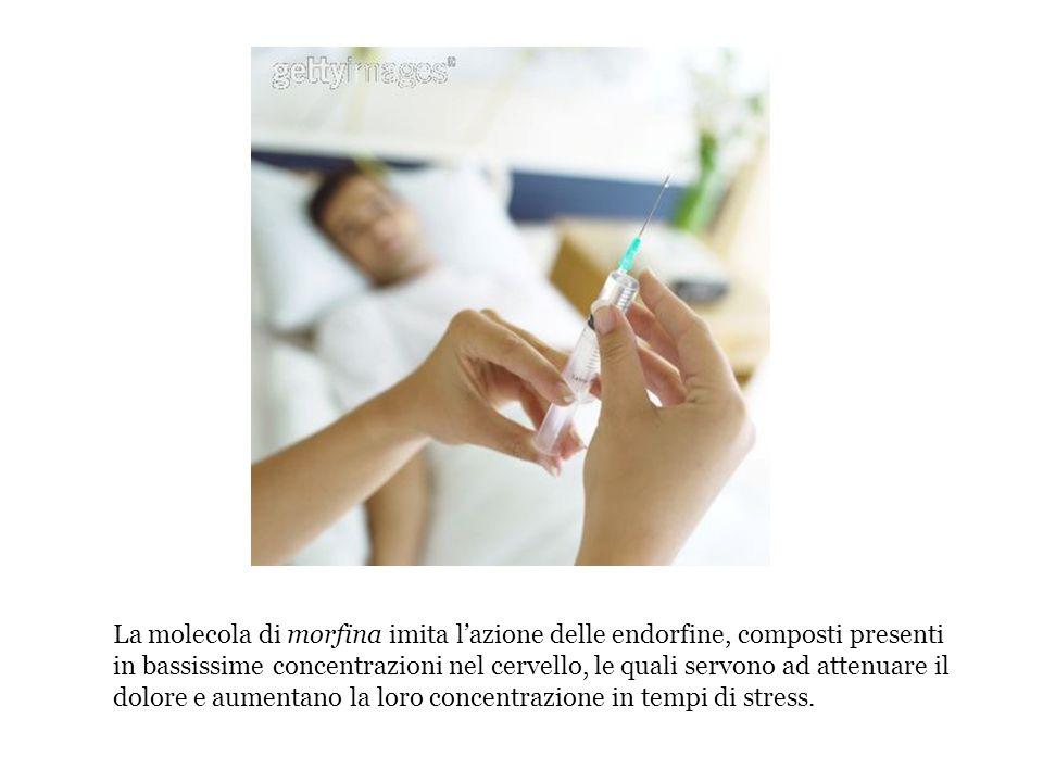 La molecola di morfina imita l'azione delle endorfine, composti presenti in bassissime concentrazioni nel cervello, le quali servono ad attenuare il dolore e aumentano la loro concentrazione in tempi di stress.