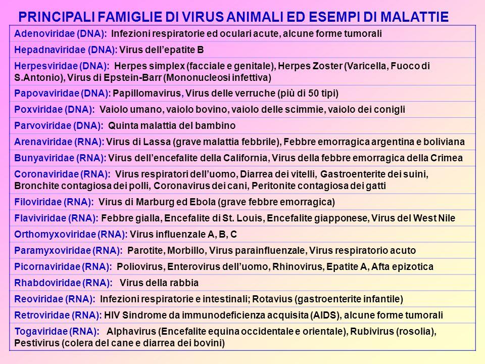 PRINCIPALI FAMIGLIE DI VIRUS ANIMALI ED ESEMPI DI MALATTIE