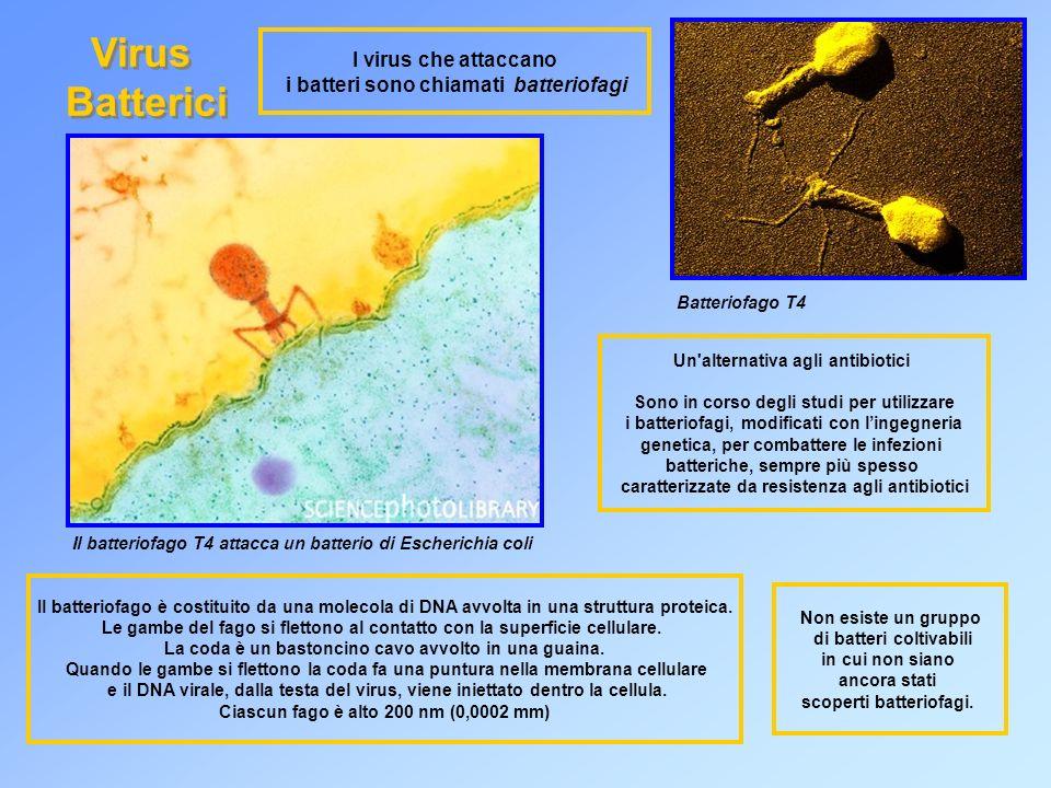 Virus Batterici I virus che attaccano