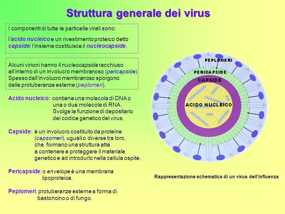 Struttura generale dei virus