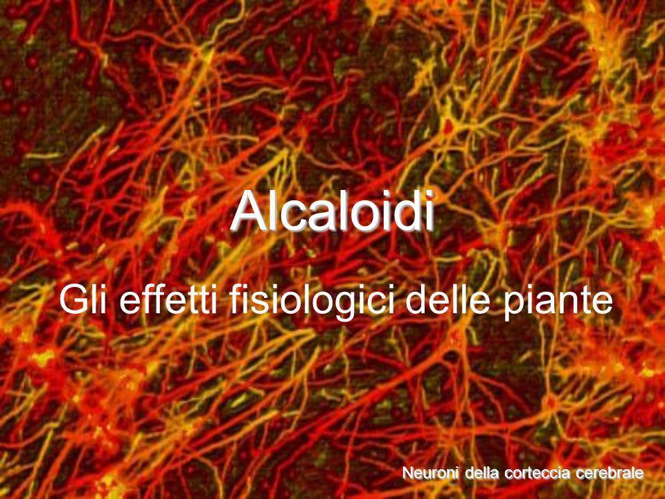 Alcaloidi Gli effetti fisiologici delle piante