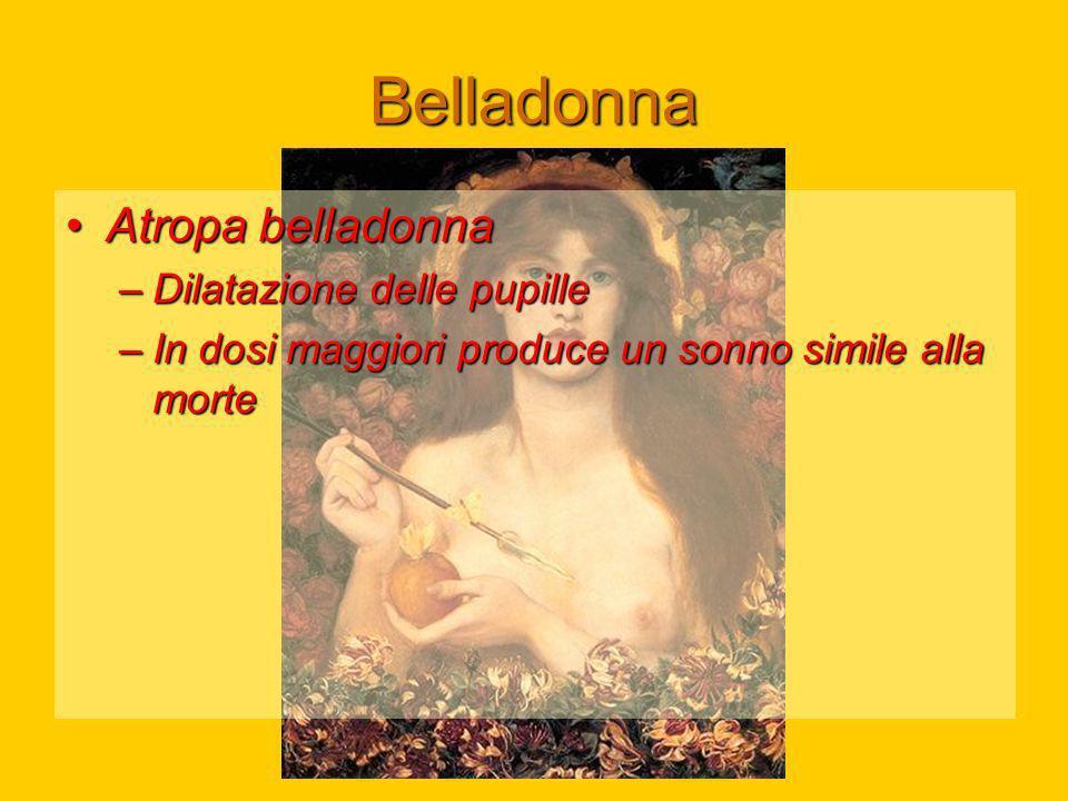 Belladonna Atropa belladonna Dilatazione delle pupille