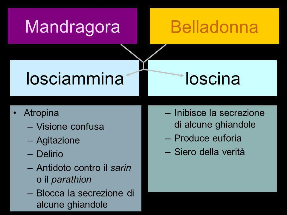 Mandragora Belladonna Iosciammina Ioscina Atropina Visione confusa