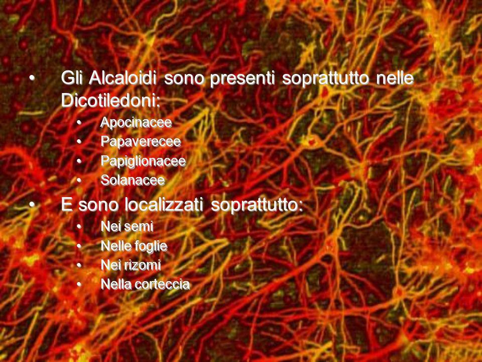 Gli Alcaloidi sono presenti soprattutto nelle Dicotiledoni: