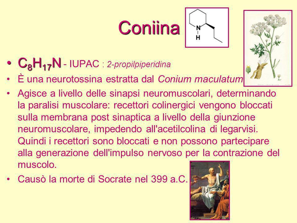 Coniina C8H17N - IUPAC : 2-propilpiperidina