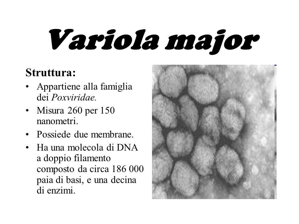Variola major Struttura: Appartiene alla famiglia dei Poxviridae.