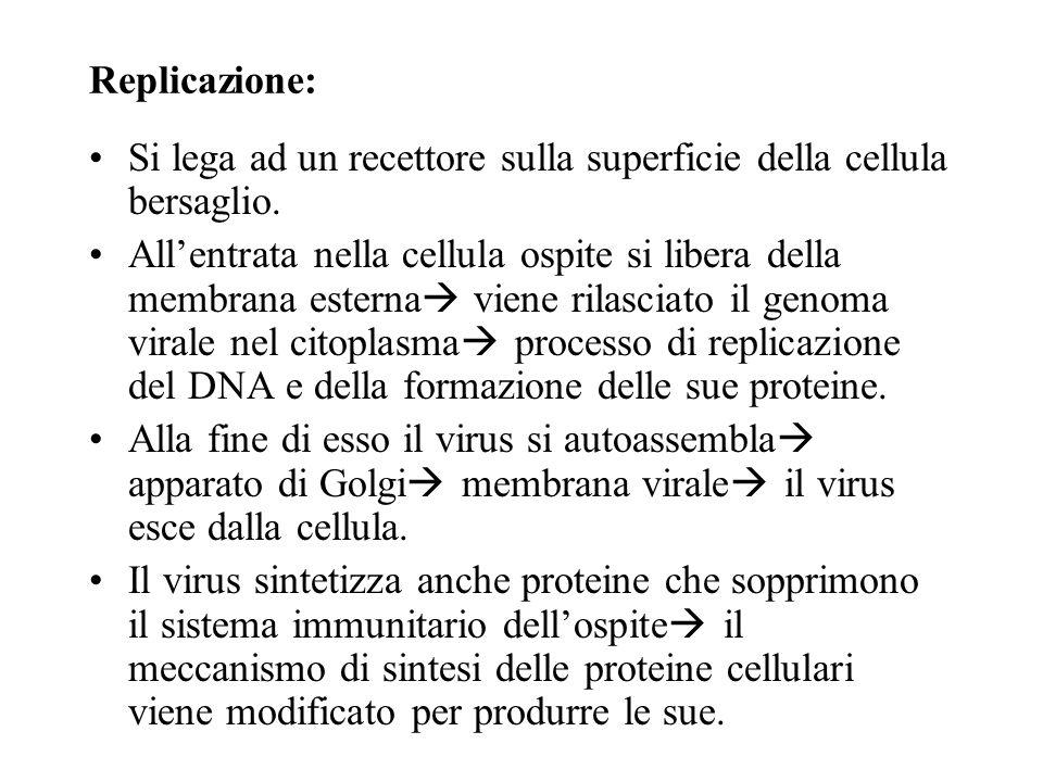Replicazione: Si lega ad un recettore sulla superficie della cellula bersaglio.