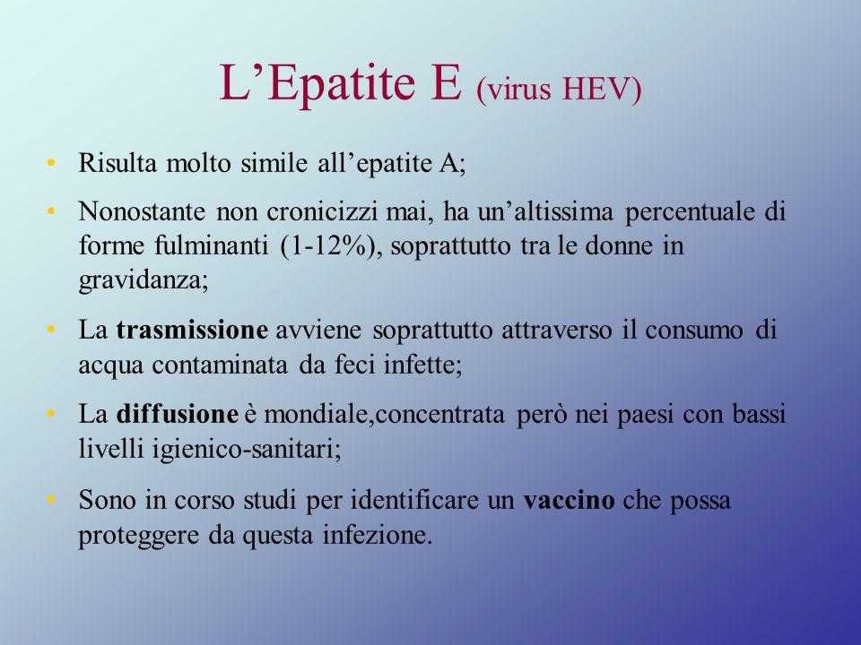 L'Epatite E (virus HEV)
