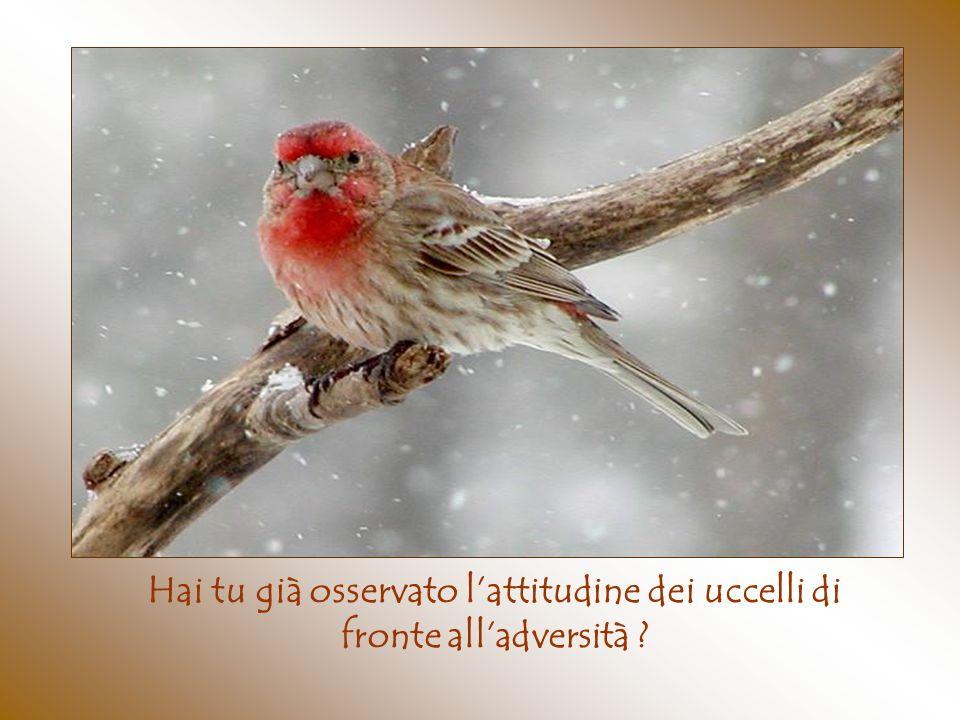 Hai tu già osservato l'attitudine dei uccelli di fronte all'adversità