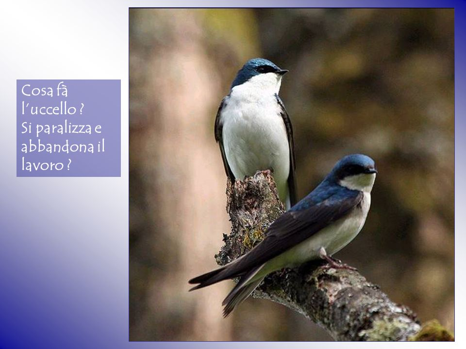 Cosa fà l'uccello Si paralizza e abbandona il lavoro