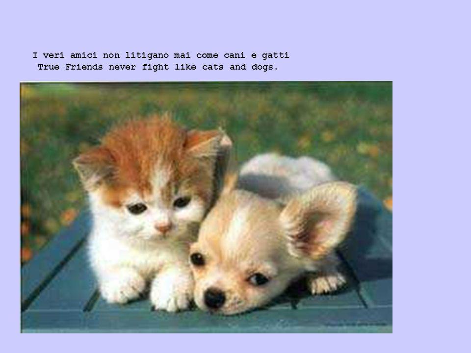 I veri amici non litigano mai come cani e gatti