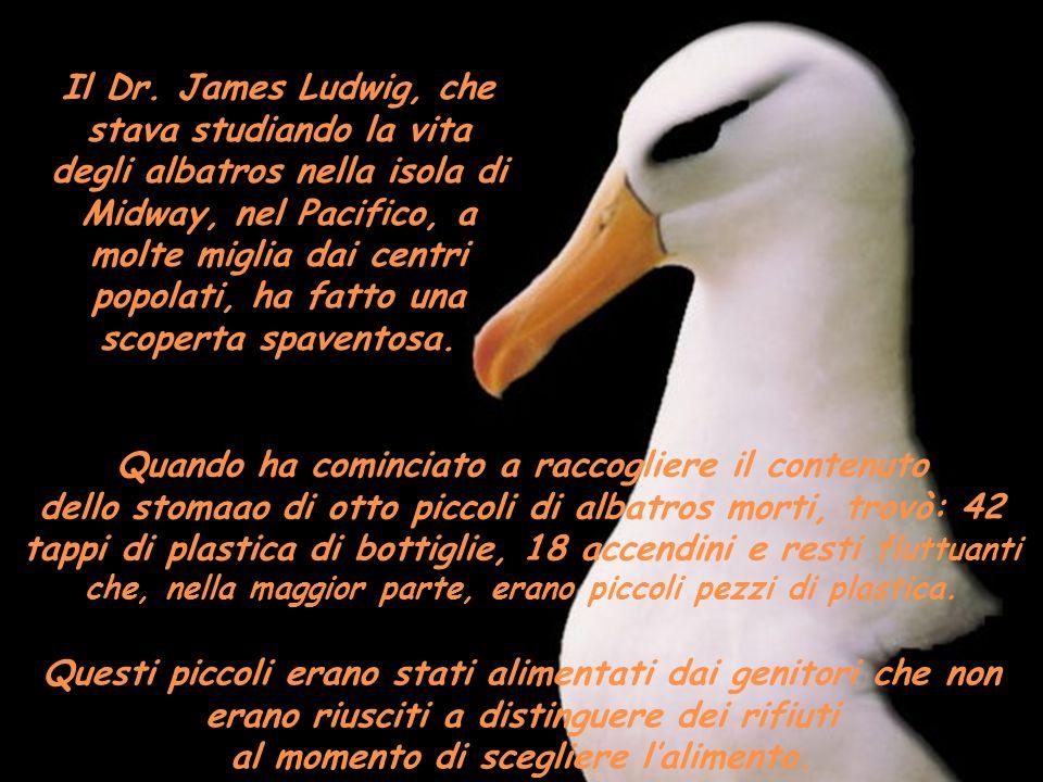 Il Dr. James Ludwig, che stava studiando la vita degli albatros nella isola di Midway, nel Pacifico, a molte miglia dai centri popolati, ha fatto una scoperta spaventosa.
