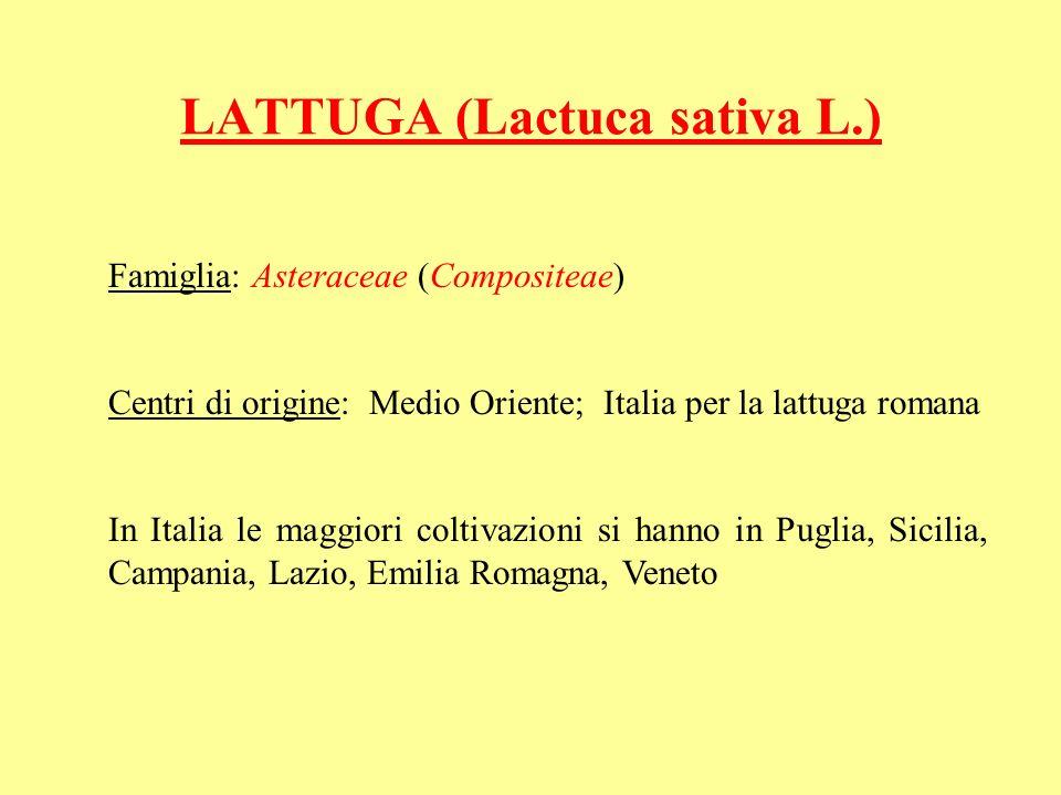 LATTUGA (Lactuca sativa L.)