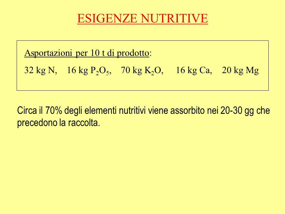 ESIGENZE NUTRITIVE Asportazioni per 10 t di prodotto: 32 kg N, 16 kg P2O5, 70 kg K2O, 16 kg Ca, 20 kg Mg.
