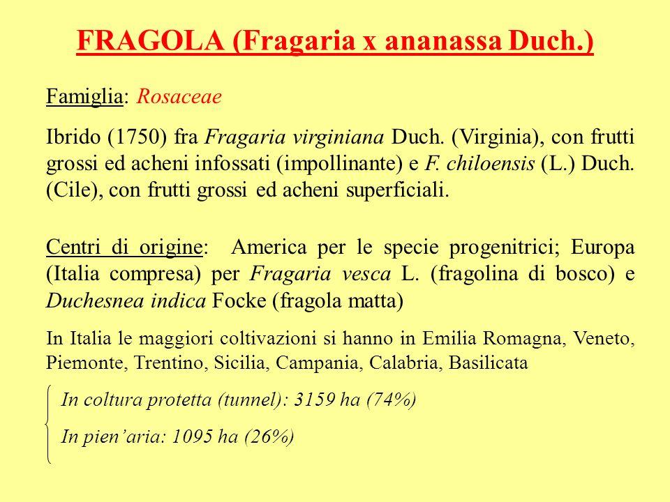 FRAGOLA (Fragaria x ananassa Duch.)