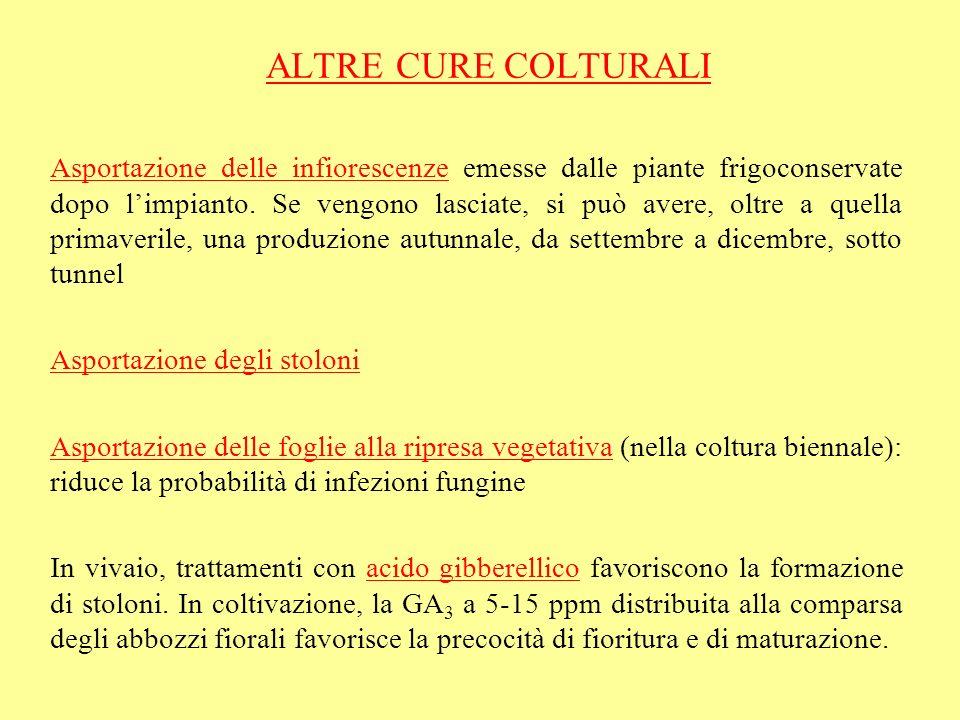 ALTRE CURE COLTURALI
