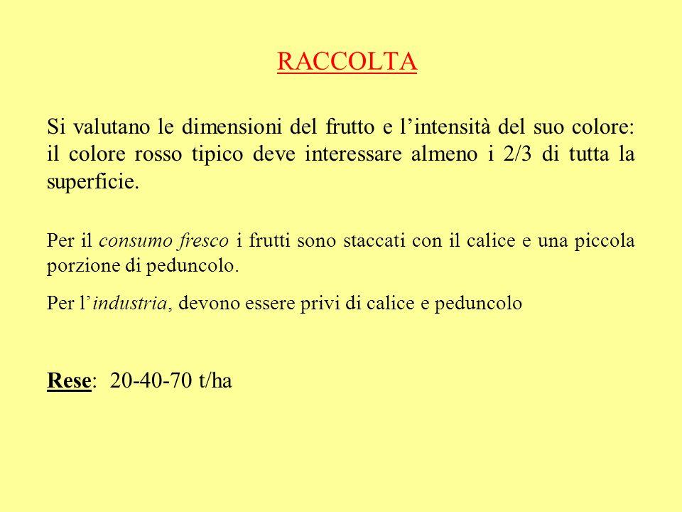 RACCOLTA