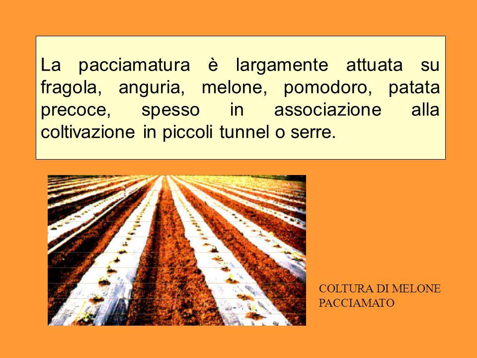 La pacciamatura è largamente attuata su fragola, anguria, melone, pomodoro, patata precoce, spesso in associazione alla coltivazione in piccoli tunnel o serre.