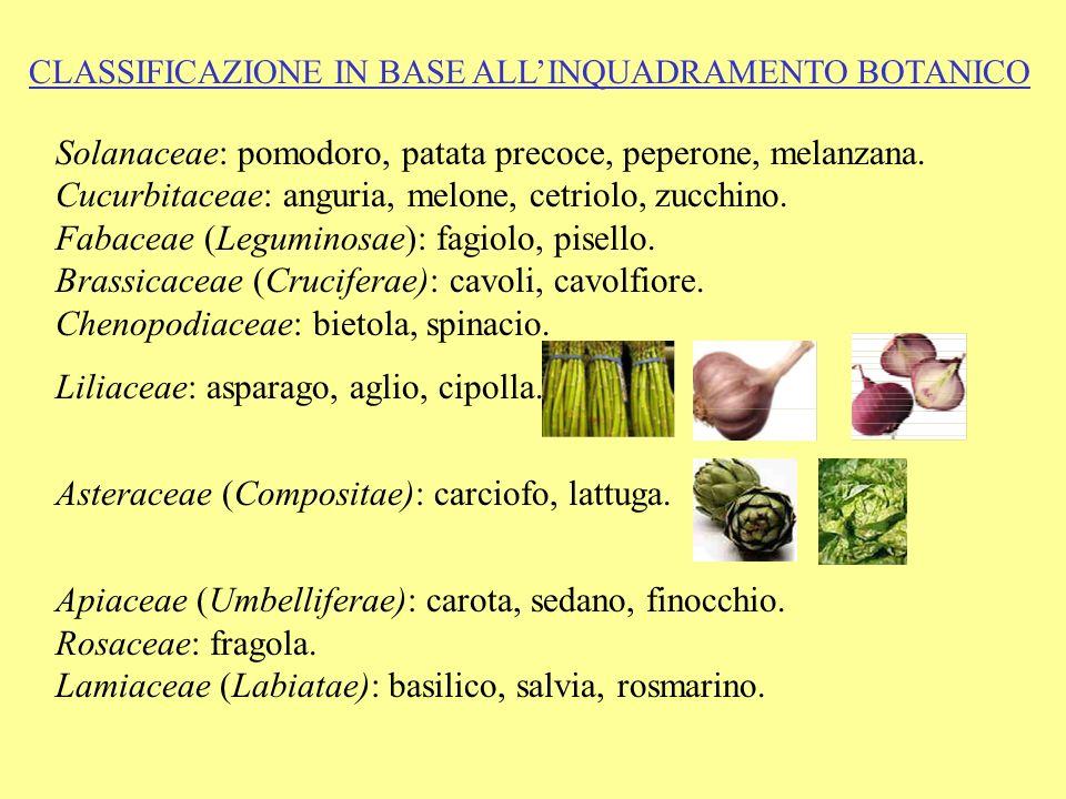Liliaceae: asparago, aglio, cipolla.