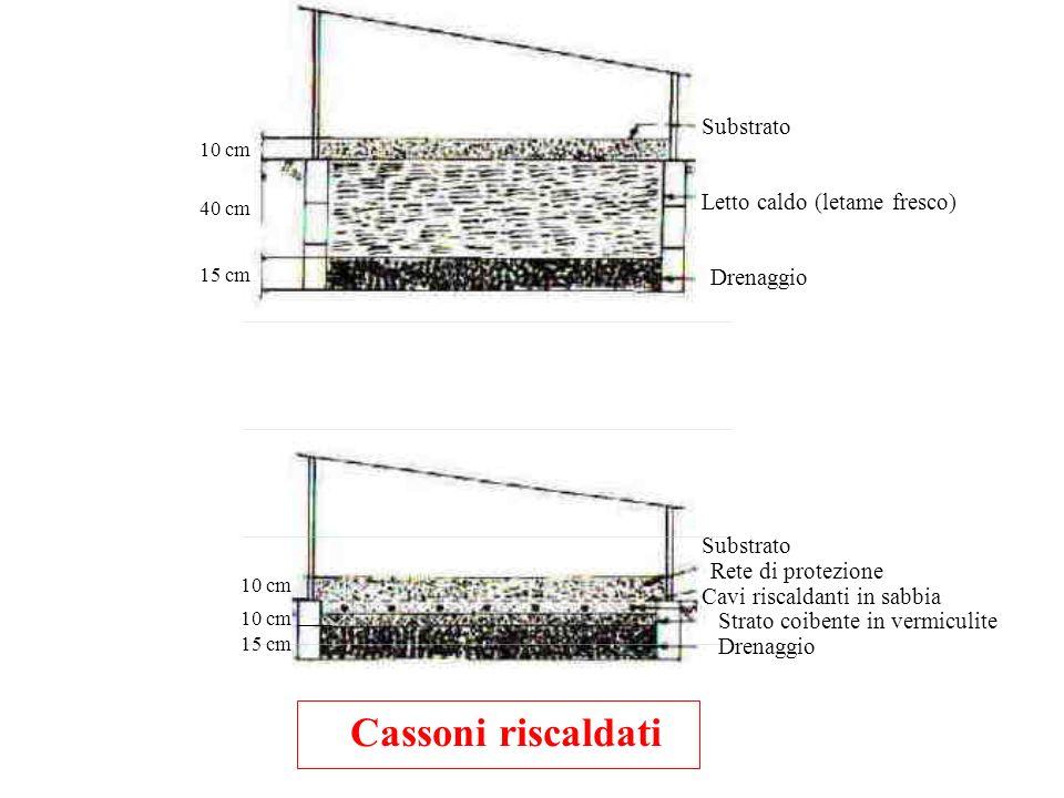 Cassoni riscaldati Substrato Letto caldo (letame fresco) Drenaggio