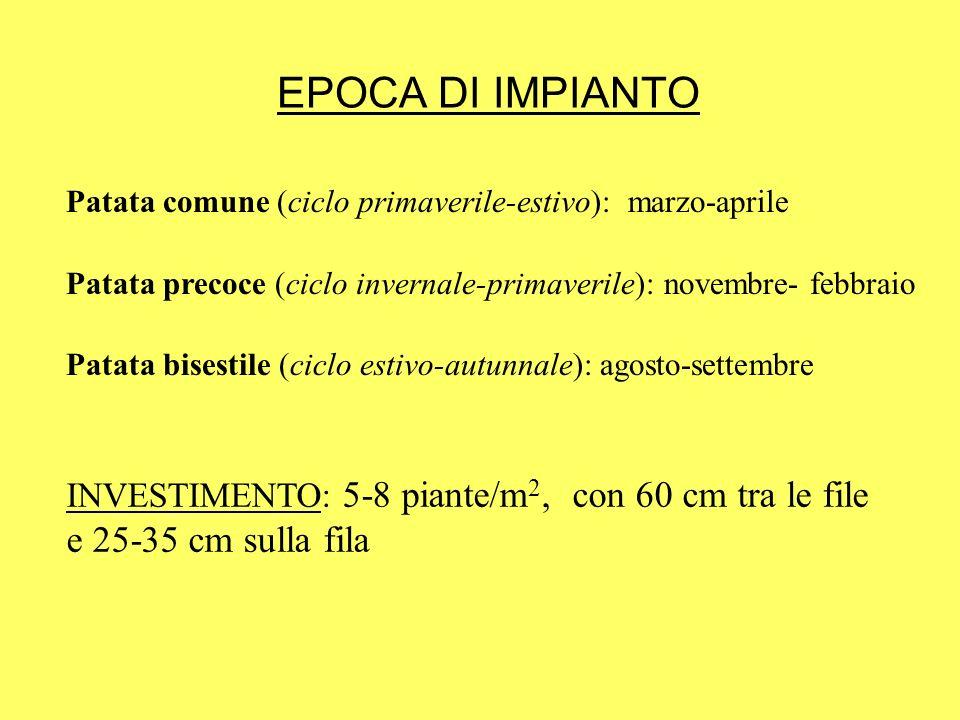 EPOCA DI IMPIANTO Patata comune (ciclo primaverile-estivo): marzo-aprile. Patata precoce (ciclo invernale-primaverile): novembre- febbraio.