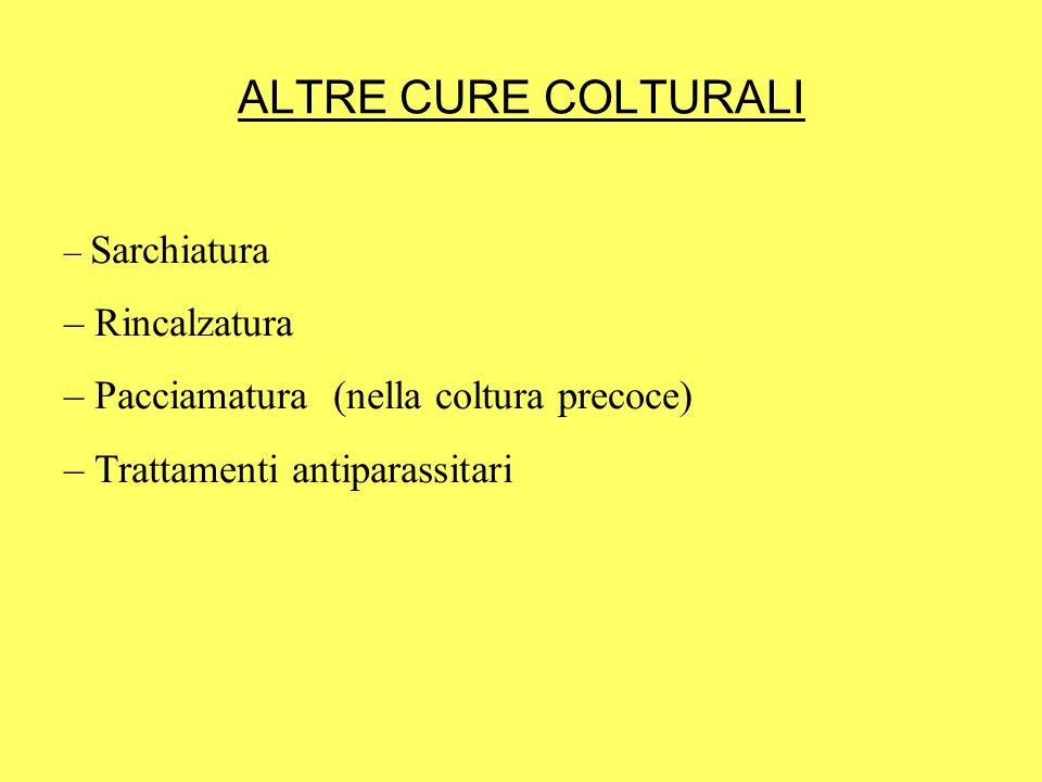 ALTRE CURE COLTURALI Rincalzatura Pacciamatura (nella coltura precoce)