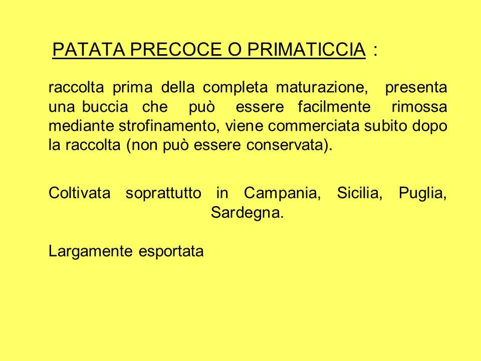 PATATA PRECOCE O PRIMATICCIA :