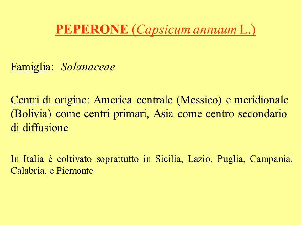 PEPERONE (Capsicum annuum L.)