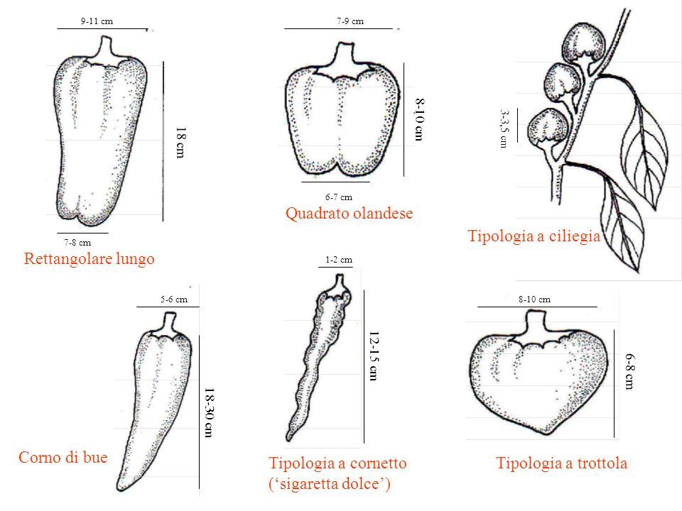 Tipologia a cornetto ('sigaretta dolce') Tipologia a trottola