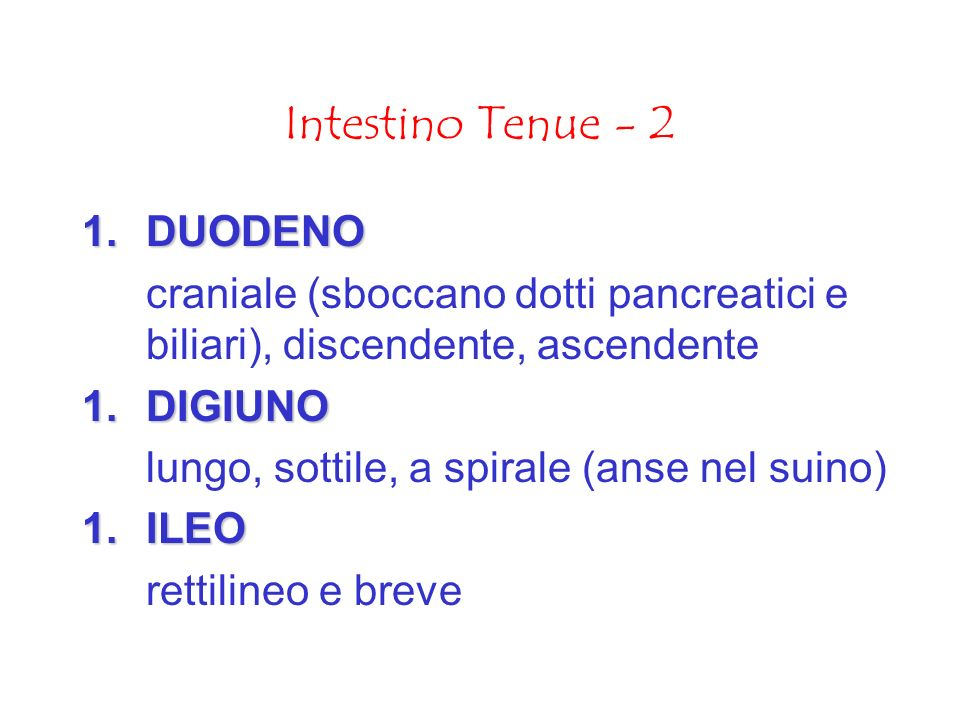 Intestino Tenue - 2 DUODENO