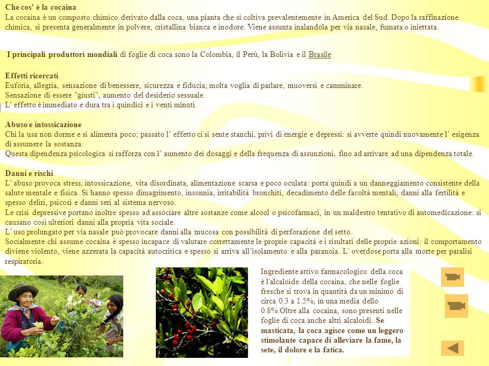 Che cos è la cocaina La cocaina è un composto chimico derivato dalla coca, una pianta che si coltiva prevalentemente in America del Sud. Dopo la raffinazione chimica, si presenta generalmente in polvere, cristallina bianca e inodore. Viene assunta inalandola per via nasale, fumata o iniettata. I principali produttori mondiali di foglie di coca sono la Colombia, il Perù, la Bolivia e il Brasile