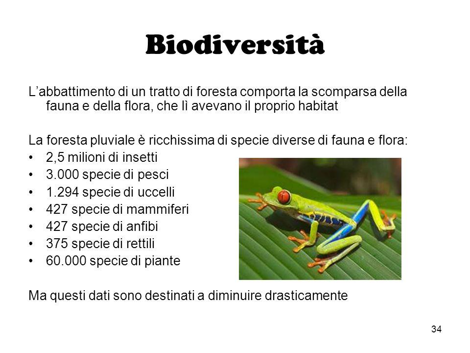 Biodiversità L'abbattimento di un tratto di foresta comporta la scomparsa della fauna e della flora, che lì avevano il proprio habitat.
