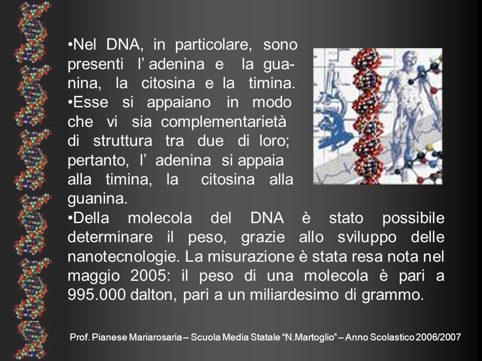 Nel DNA, in particolare, sono presenti l' adenina e la gua-