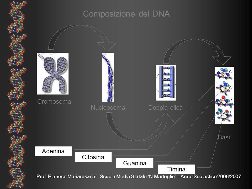 Composizione del DNA Cromosoma Nucleosoma Doppia elica Basi Adenina