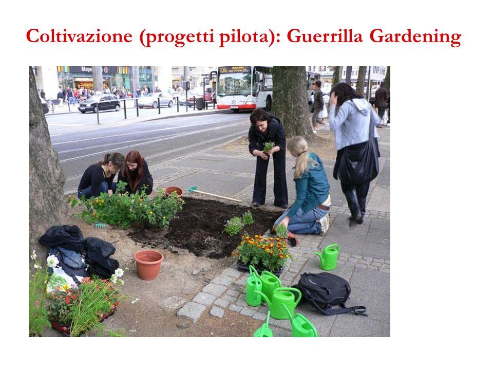 Coltivazione (progetti pilota): Guerrilla Gardening