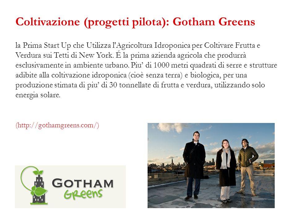 Coltivazione (progetti pilota): Gotham Greens