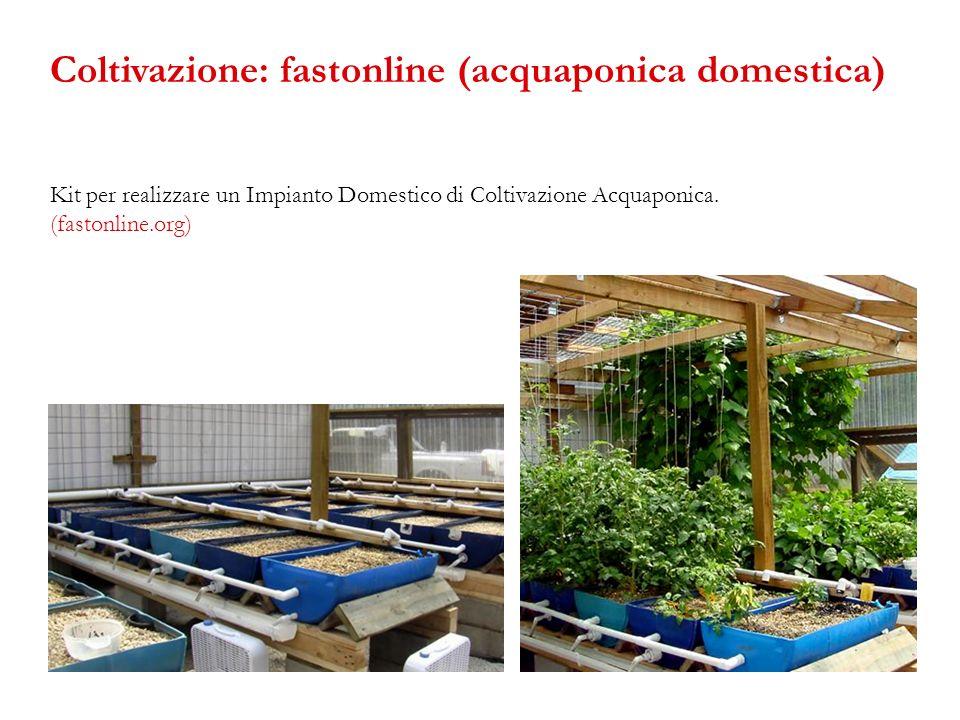 Coltivazione: fastonline (acquaponica domestica)