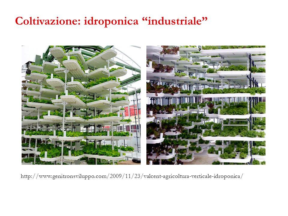 Coltivazione: idroponica industriale