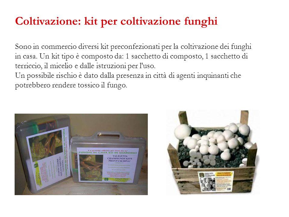 Coltivazione: kit per coltivazione funghi
