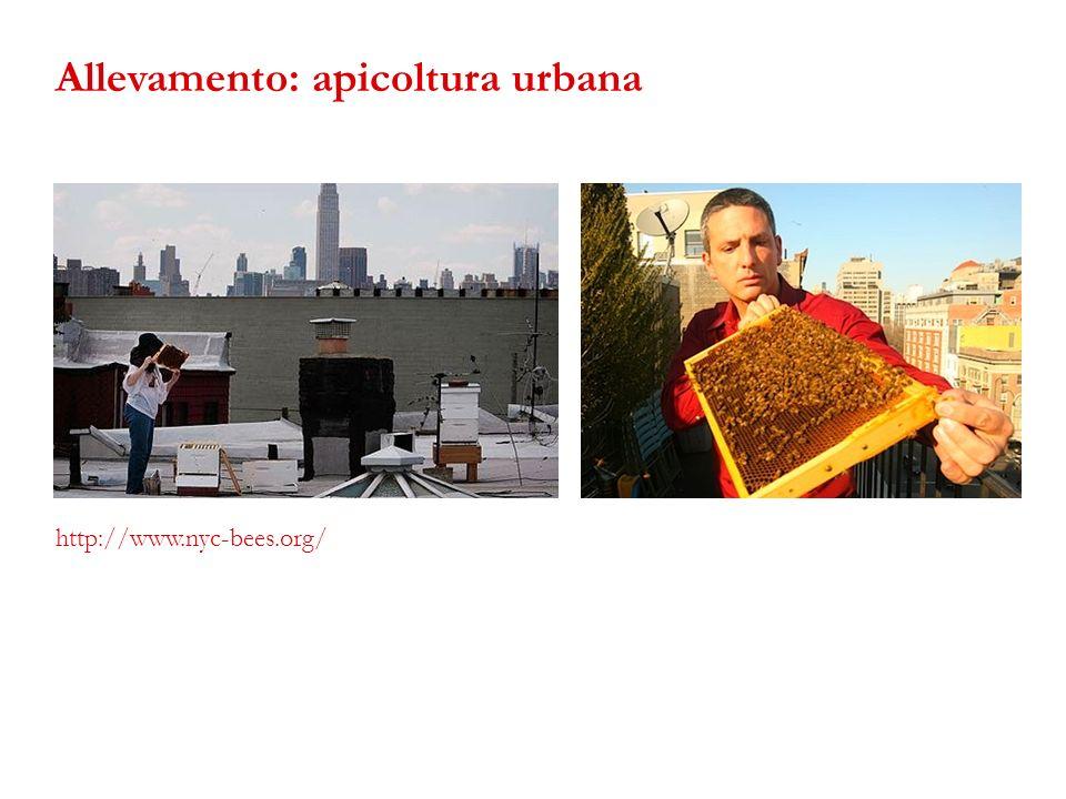 Allevamento: apicoltura urbana
