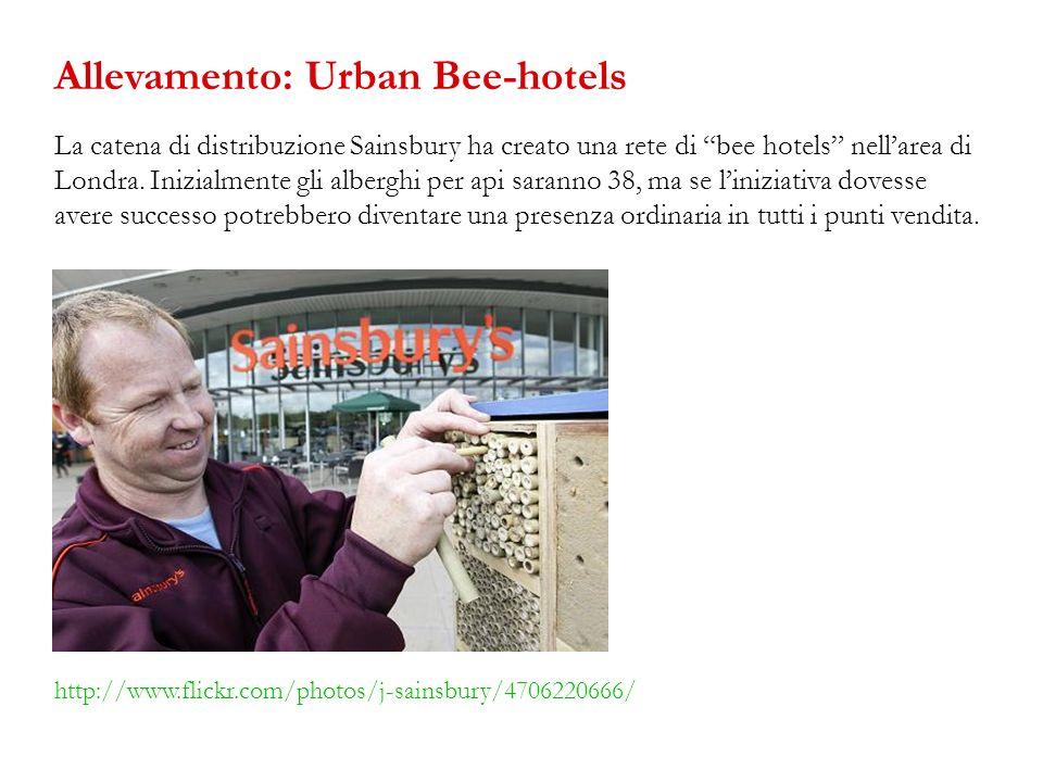 Allevamento: Urban Bee-hotels