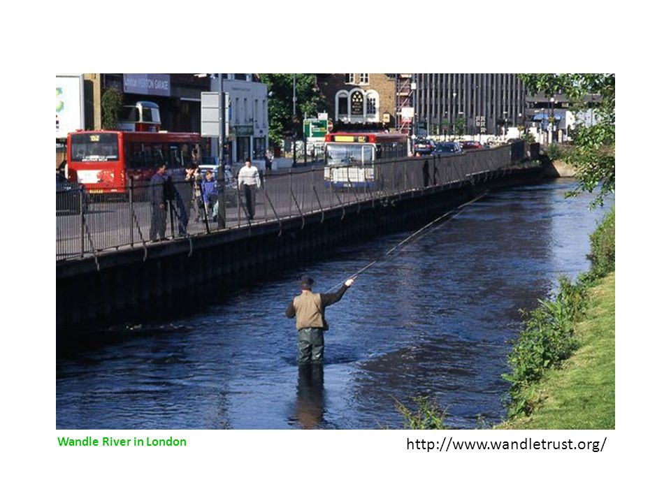 Wandle River in London http://www.wandletrust.org/